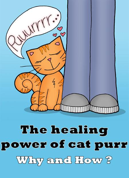 The-healing-power-of-cat-purr